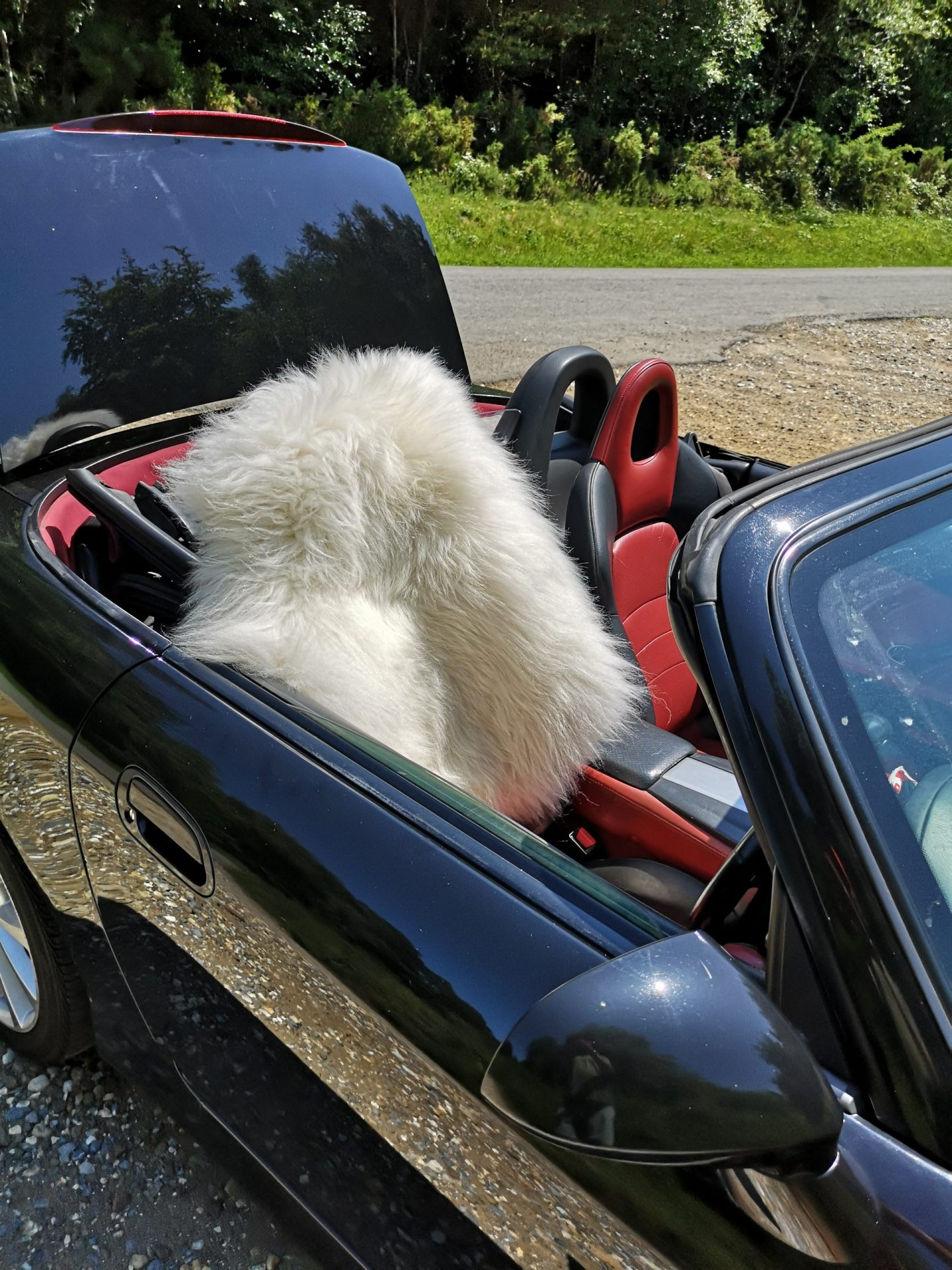 shetland sheepskin on a car seat