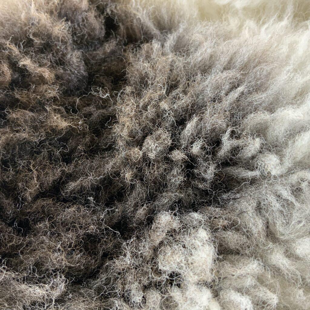 clumpy brown patch on spotty sheepskin
