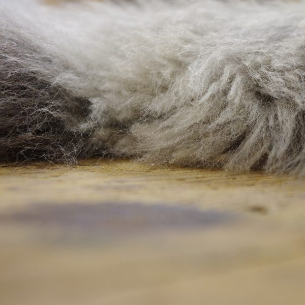 Otter Sheepskin july 2021