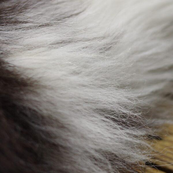 Poundsgate Sheepskin, september 2021