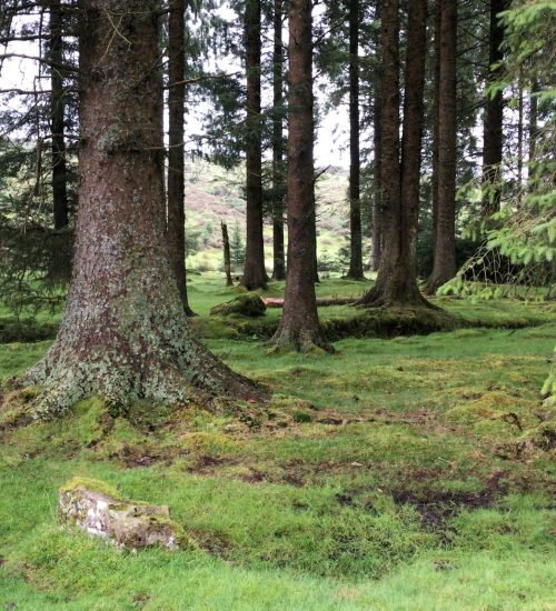 Believer Forest with mossy floor
