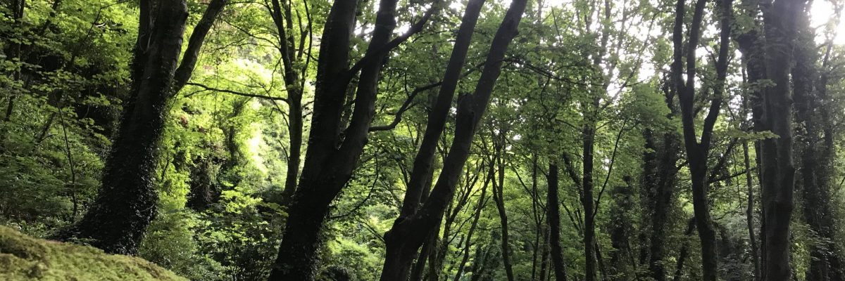 The woods at Watcombe beach car park